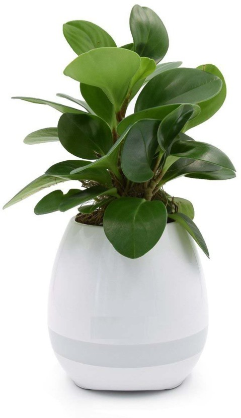 Wonder World ® Bluetooth Speaker, Rebex LED Night Light Wireless Bluetooth Speaker - Flower Pots, Home Furnishing Office Decoration Speaker - Singing Flowerpot Plastic Vase