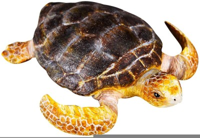 Collecta Loggerhead Turtle88094