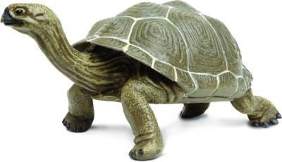 Safari Ltd IC Tortoise