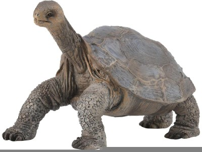 Collecta Pinta Island Tortoise (In memory of Lonesome George)88619