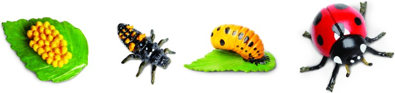 Safari Ltd So Life Cycle Of A Ladybug(Multicolor)