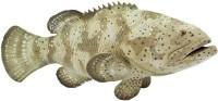 Safari Ltd Ic Goliath Grouper(Multicolor)