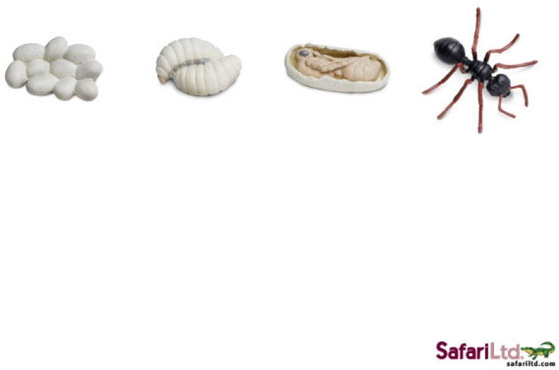 Safari Ltd So Life Cycle Of An Ant(Multicolor)