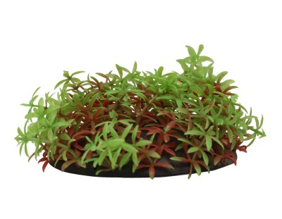 Jainsons Laterite Planted Substrate(Green, .2 KG)