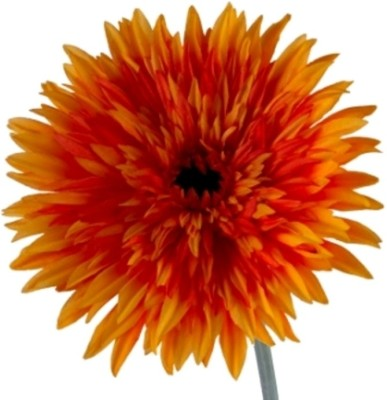 Flowers Forever Single Big Daisy Orange Assorted Artificial Flower(Pack of 1)
