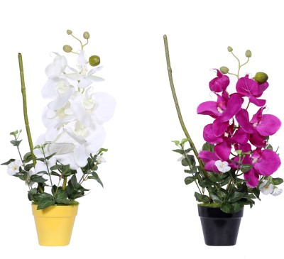 Evergreen White, Purple Assorted Artificial Flower  with Pot