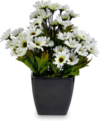 Magical Petals White Daisy Artificial Flower  with Pot