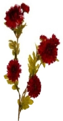 Flowers Forever Daisy Branch Red Assorted Artificial Flower(Pack of 1)