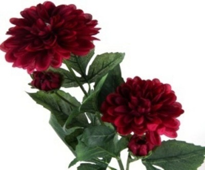 Flowers Forever 4 Heads Dahlia Maroon Assorted Artificial Flower(Pack of 1)