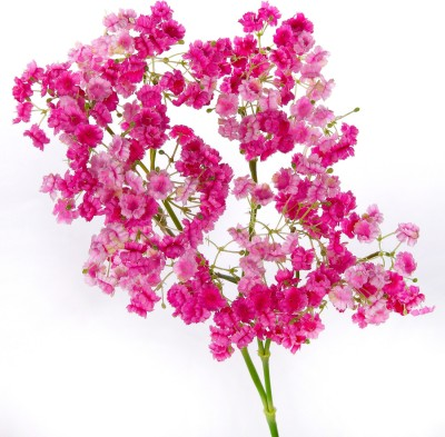 Flowers Forever 5 Head Single Star Flower Pink Assorted Artificial Flower