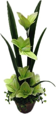 Evergreen Green Lily Artificial Flower  with Pot