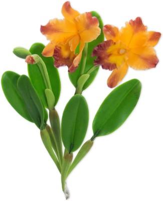 GayatriCreations Cattleya Orchid Stem Orange Orchids Artificial Flower(8 inch, Pack of 1)