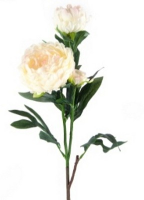 Flowers Forever 3 Heads White Peony Artificial Flower(Pack of 1)