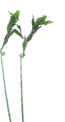 Bengal Blooms Artificial Plant(30 cm, Green)