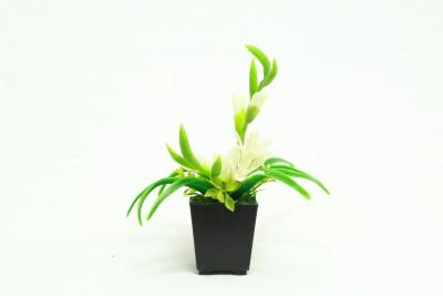 Bengal Blooms Bonsai Bonsai Wild Artificial Plant with Pot