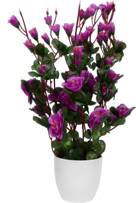 Yash Enterprises Chinese Rose Purple Bonsai Artificial Plant  with Pot