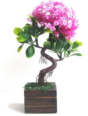 Miracle Retail S Shape Bonsai Wild Artif...