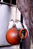 Wonderland Squirrel Proof Feeders Bird F...