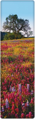That Company Called If National Geographic - Paintbrush, Lupine and Tickseed Flowers 3D Bookmark