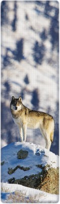 That Company Called If National Geographic - Gray Wolf 3D Bookmark