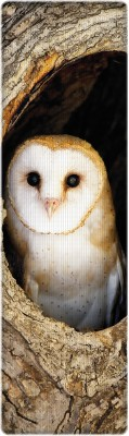 That Company Called IF National Geographic - Barn Owl 3D Bookmark