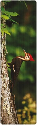 That Company Called IF National Geographic - Pileated Woodpecker 3D Bookmark