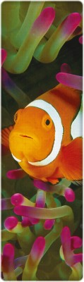 That Company Called IF National Geographic - Clown Anemonefish 3D Bookmark Bookmark