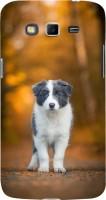 Fuson Back Cover for SAMSUNG Galaxy Grand 2, Samsung Galaxy Grand 2 G7105, Samsung Galaxy Grand 2 G7102, Samsung Galaxy Grand Ii(Puppy Love Dog)
