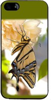 Snapdilla Back Cover for Apple iPhone 4S(Colourful Beautiful Green Background Butterfly On A Flower Back Cover)