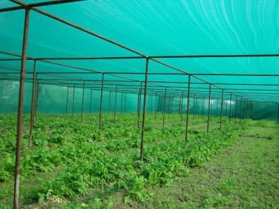 PEPPER AGRO GREEN SHADE NETTING 75% 21 SQ METERS(7M x3M) Garden Tool Kit
