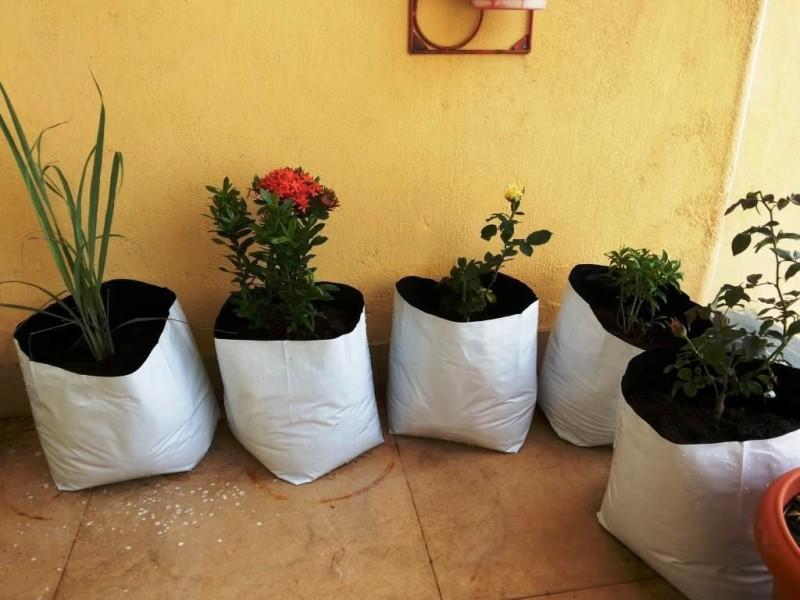 Evergreen Terrace Gardening (8 nos) Grow Bag