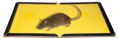 Gade mouse glue pad pack of 4