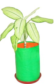 grosmart Plant Container Set(Polythene)