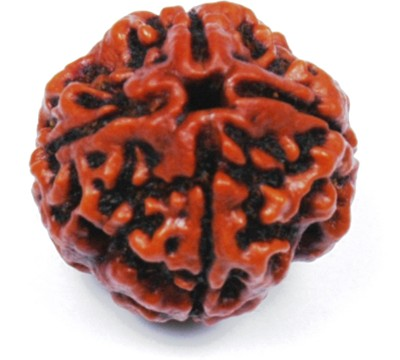 Malabar Gems 4 Faced / Four Mukhi Rudraksha Lab Certified Wood at flipkart