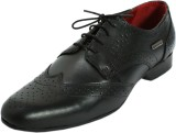 Maplewood Coventry-Black Lace Up (Black)