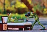 RadhaKripa funny frog photographer Poste...