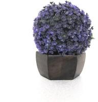 miracle retail ATB Bonsai Wild Artificial Plant  with Pot(17 cm, Multicolor)