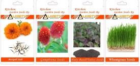 Alkarty Marigold, Gomphrena, Tulsi, Wheatgrass summer flower Seed(20 per packet)