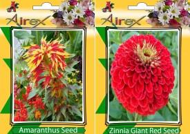 AIrex Amaranthus and Red Zinnia Summer Flower Seed (pack of 20 seed per packet) Seed(20 per packet)