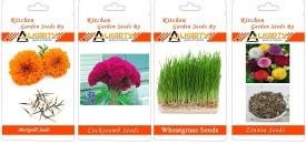 Alkarty Marigold, Cockscomb, Wheatgrass, Zinnia summer flower Seed(20 per packet)