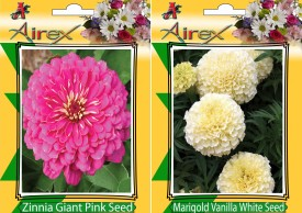 Airex Pink Zinnia and white Marigold Summer Flower Seed (pack of 10 Seed Per Packet) Seed(10 per packet)
