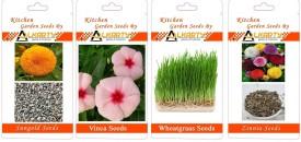 Alkarty Sungold, Vinca, Wheatgrass, Zinnia summer flower Seed(20 per packet)