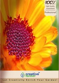 Creative Farmer Flower Seeds Genda Pot Marigold Orange Kitchen Garden Pack Seed(20 per packet)