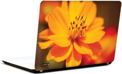 PicsAndYou Orange Glory Vinyl Laptop Decal 15.6
