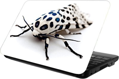 Printland Spider Vinyl Laptop Decal 13.5