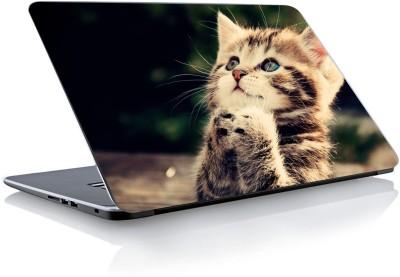 Devendra Graphics Cute Cat Vinyl Laptop Decal 15.6