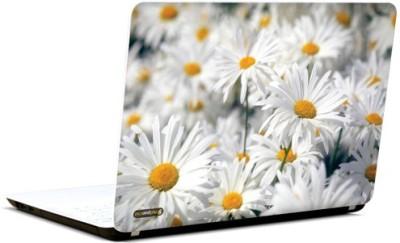 PicsAndYou My Fair Lady Vinyl Laptop Decal
