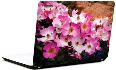 PicsAndYou Posh Pinks Vinyl Laptop Decal