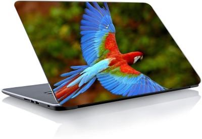Devendra Graphics Parrot Vinyl Laptop Decal