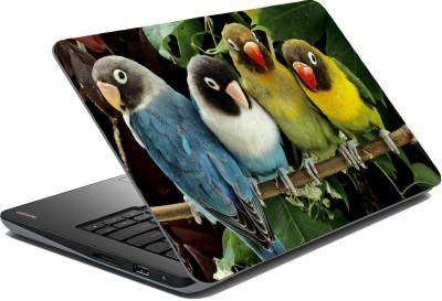 Posterhunt SVshi4866 Parrot Laptop Skin Vinyl Laptop Decal 14.1